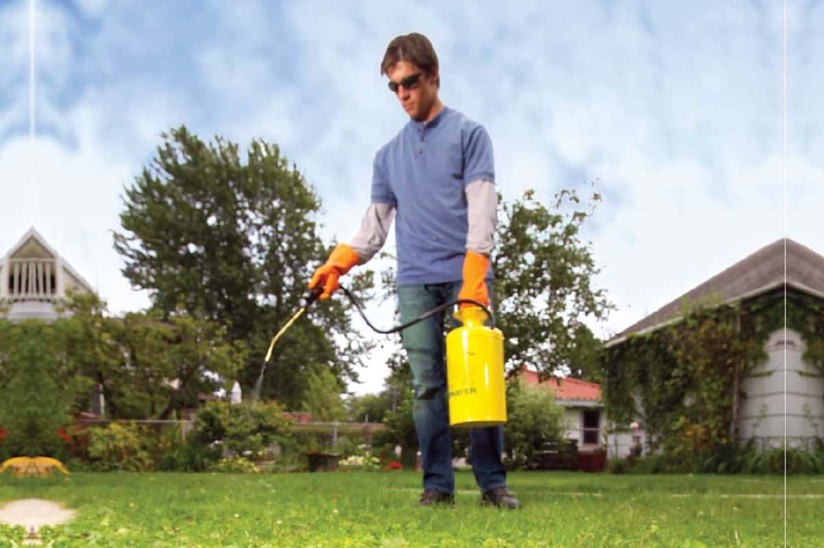 15 Organic Weed Control Methods for Lawns and Garden Areas
