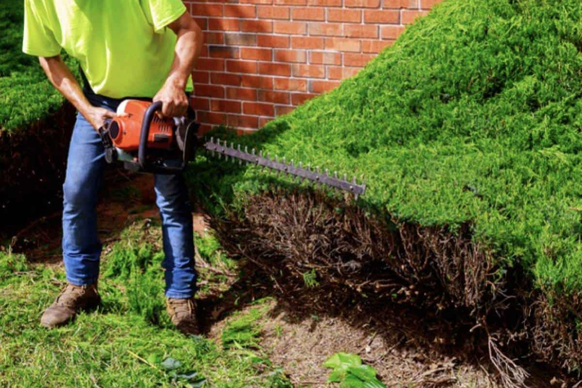 Top 7 Best Pole Saw for Garden Cleaning