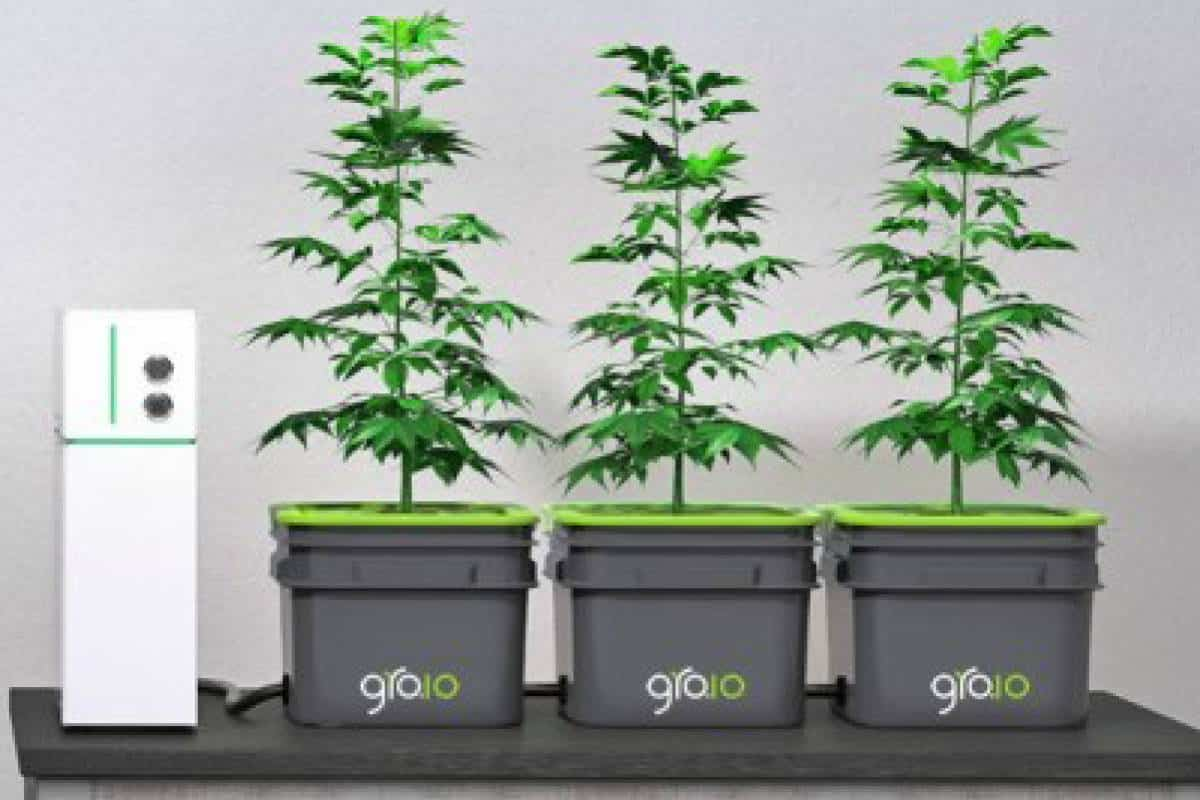 Water Chiller Hydroponics The Definitive Buying Guide for Gardeners